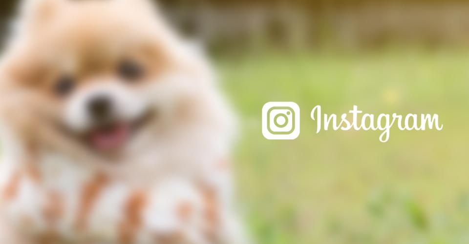 0:instagram